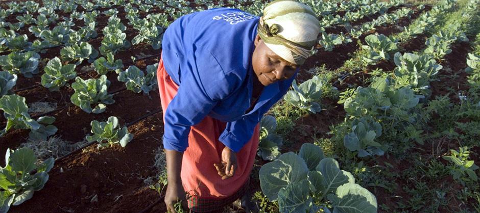 Women & Food Security